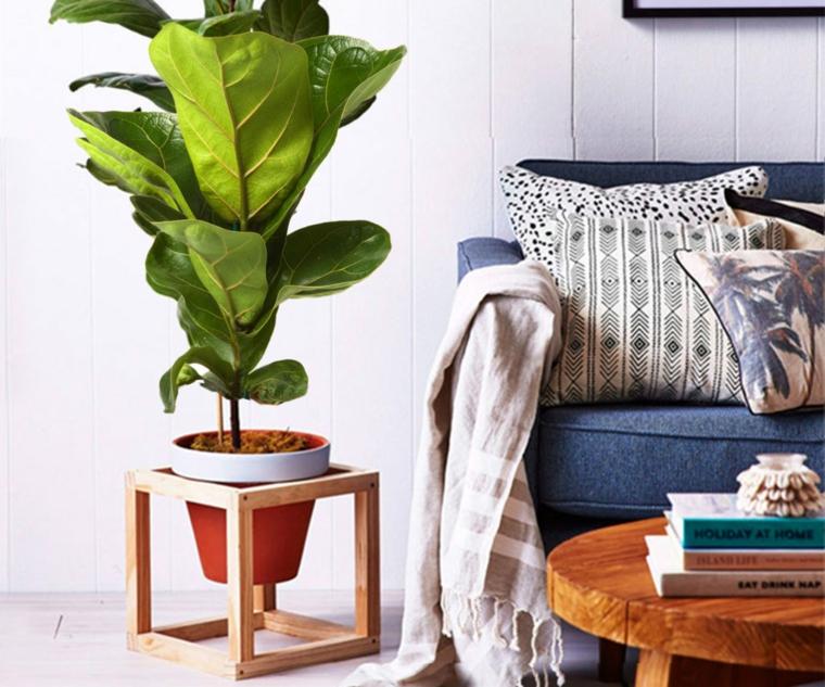 soggiorno piante eleganti da appartamento foglia verde vaso tavolino legno divano libri