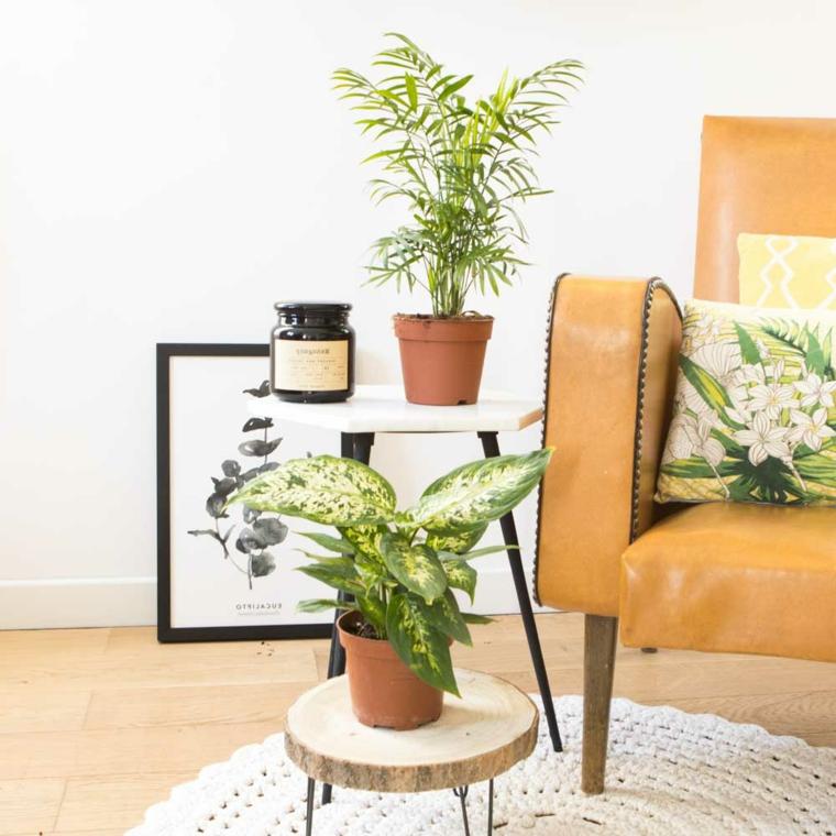 soggiorno poltrona pelle tavolini legno piante da appartamento depurative cornice tappeto