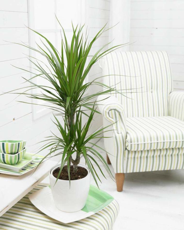 soggiorno poltrona tavolino pianta da salotto con foglie rosse e verdi vaso piatto