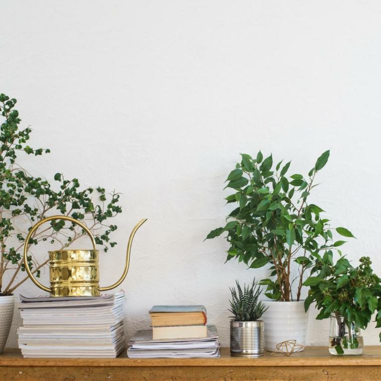 tavolo legno libri decorazioni vaso barattolo latta piante ornamentali da interno