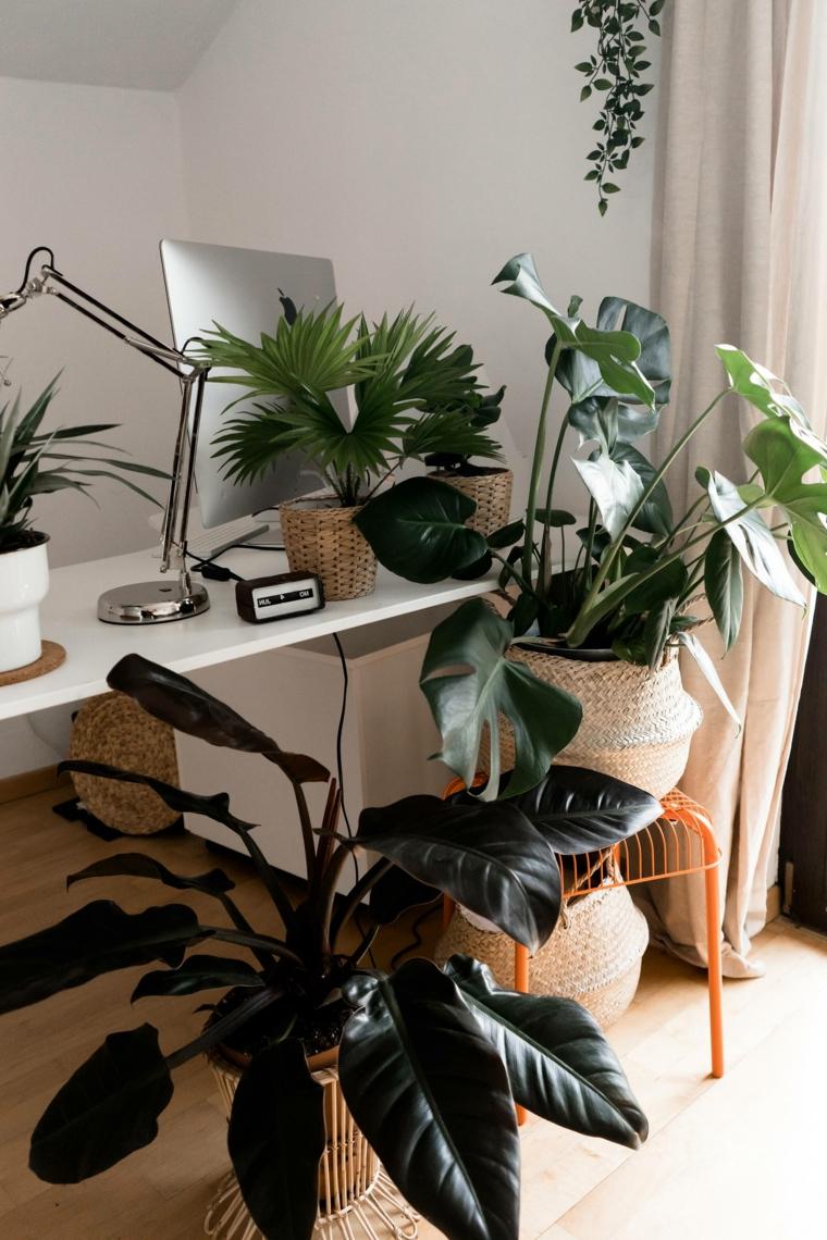 ufficio casa scrivania vasi piante resistenti al sole poca acqua foglia verde