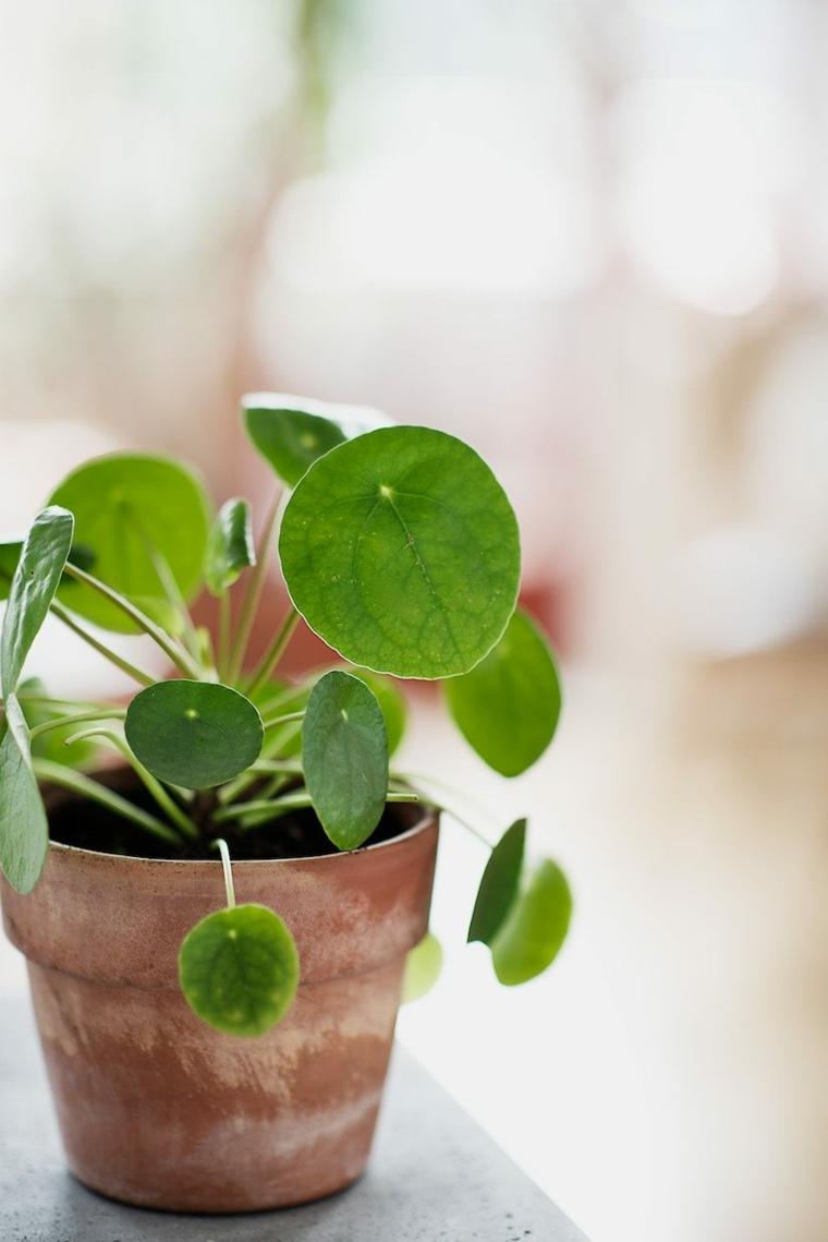 vaso argilla vintage piante verdi da appartamento facili da tenere figlia piccola