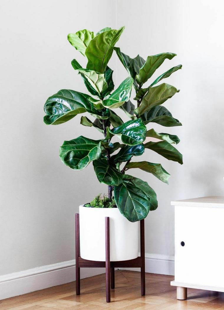 vaso bianco porcellana legno mobile piante foglia larga da appartamento soggiorno