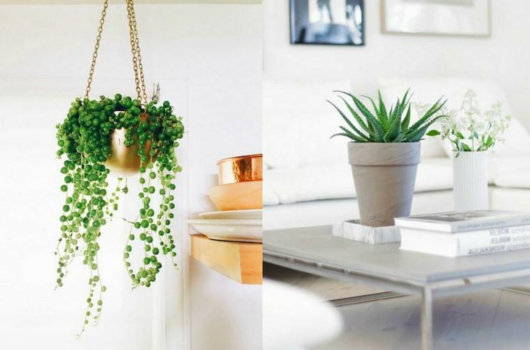 vaso da appendere piante da appartamento resistenti tavolino libri aloe verde