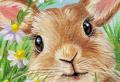 Disegni di Pasqua da stampare e colorare: attività per bambini e adulti!