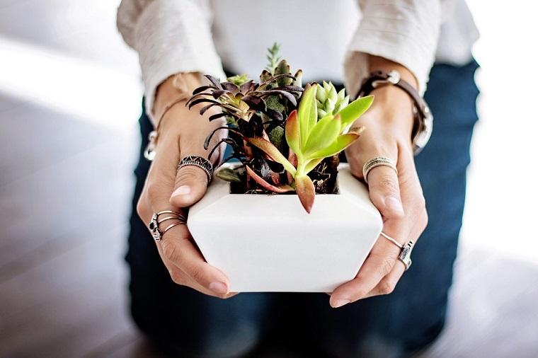 donna che tiene vaso succulenti piante grasse