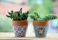 Come prendersi cura di un cactus