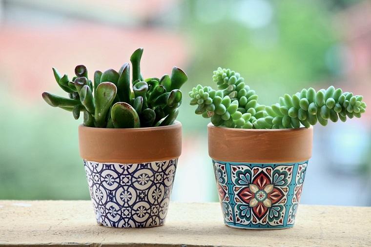 due vasi di terracotta piante grasse foglia verde