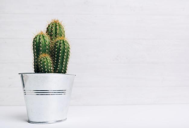 immagine cactus in vaso di metallo come curare le piante grasse