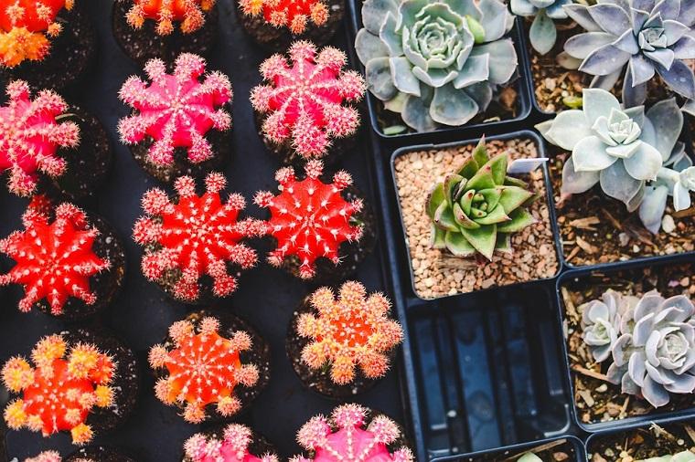 piccoli vasi di piante grasse colorate come curarli