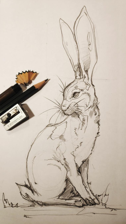 schizzo a matita di un coniglio disegni di pasqua con matita