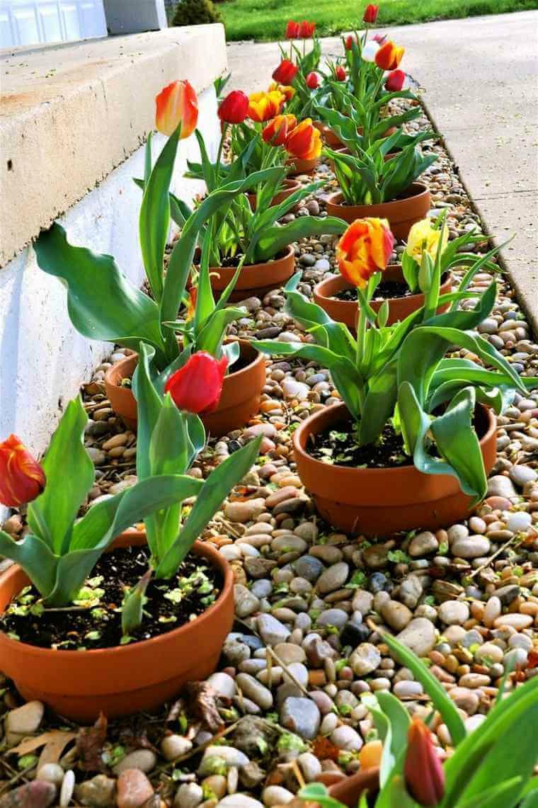 aiuole economiche fai da te giardino con sassi vasi di terracotta con tulipani