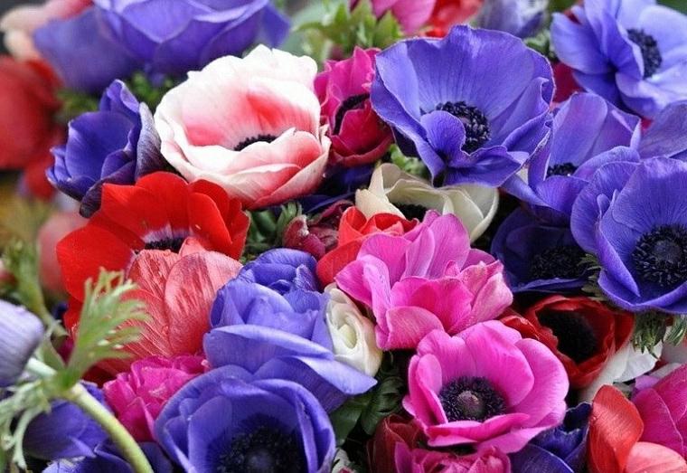 anemona piante perenni idee per abbellire il giardino fiori con petali colorati