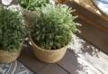 Abbellire il giardino con pochi soldi: ecco il modo più semplice per farlo!