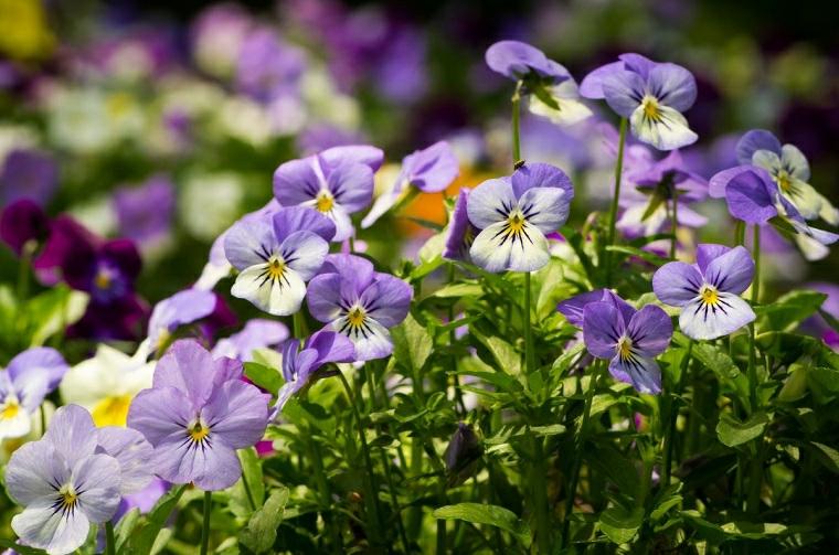 come costruire una aiuola giardino con fiori stagionali petali viola