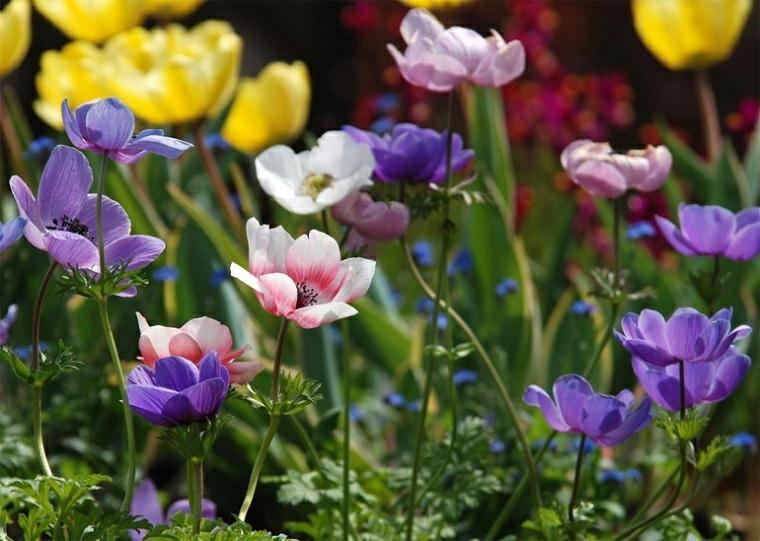 fiori colorati anemona come costruire una aiuola giardino di casa