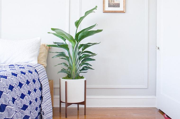 sterlizia nicolai uccello del paradiso gigante piante da appartamento cura