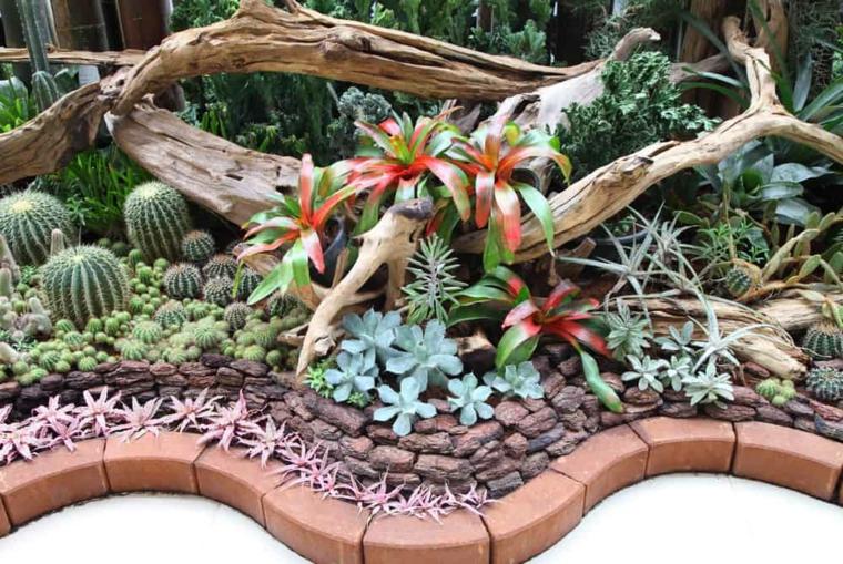 aiuola da giardino con cactus piante grasse da esterno come curarle