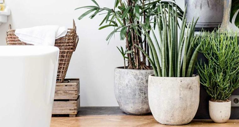 bagno decorato con vasi di succulente piante verdi facili da tenere