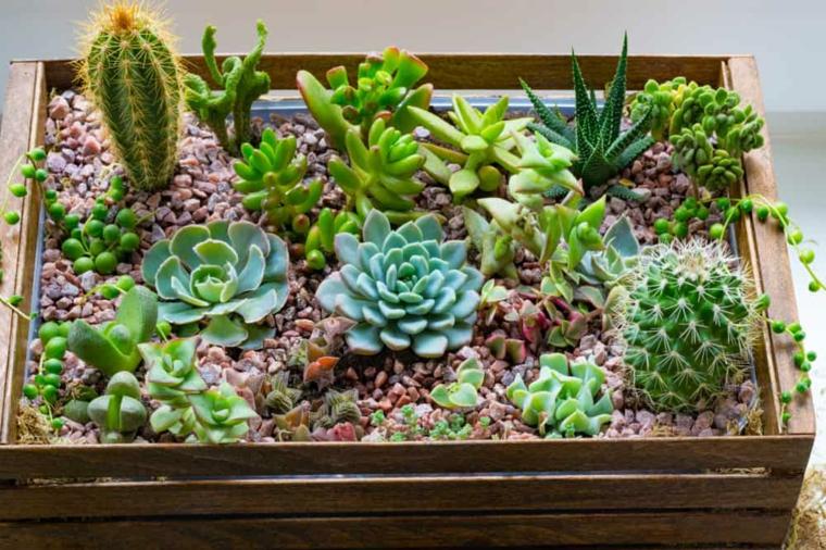 cassetta di legno con ghiaia composizioni piante grasse da esterno