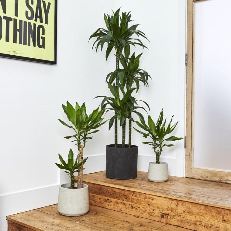 come abbellire una scala interna con piante dracaena con vasi in bianco e nero