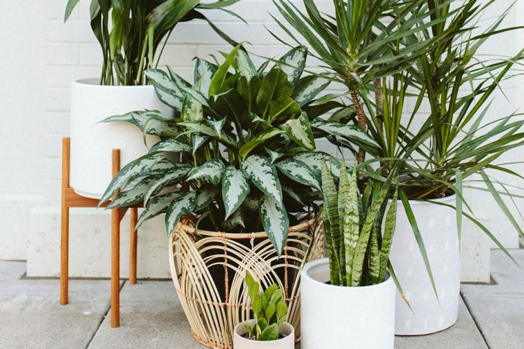 come abbellire una scala interna con piante vasi di ceramica bianca