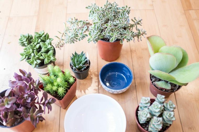 come curare le piante grasse trapianto di succulenti in piccoli contenitori