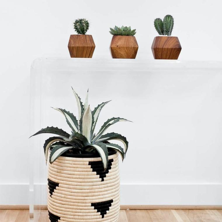 contenotire colorato per succulenta piante da appartamento resistenti