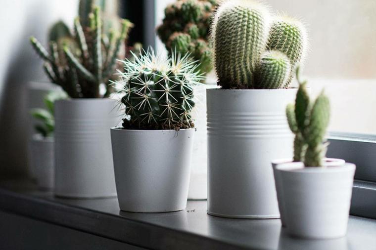 davanzale finestra decorato con cactus piante grasse con spina da appartamento