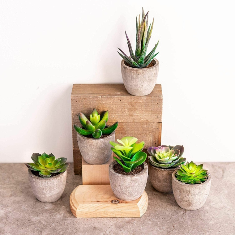decorare casa con vasi di terracotta e piante succulente foglia verde succosa