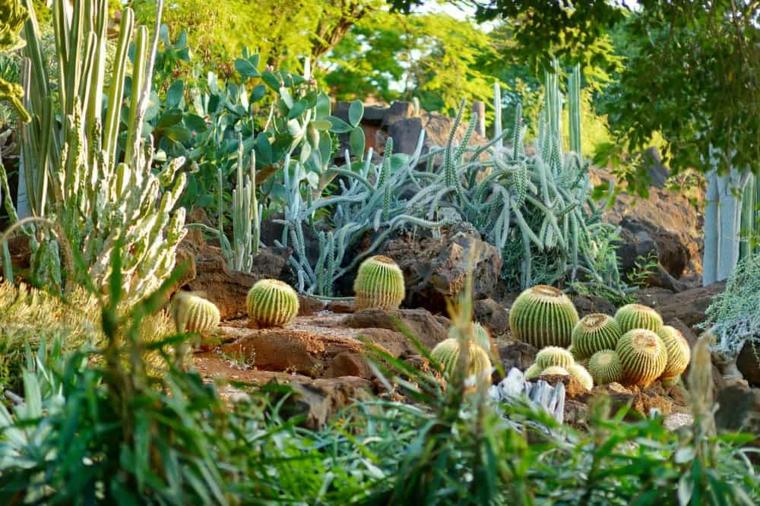 decorazione giardino tropicale con piante succulente cactus