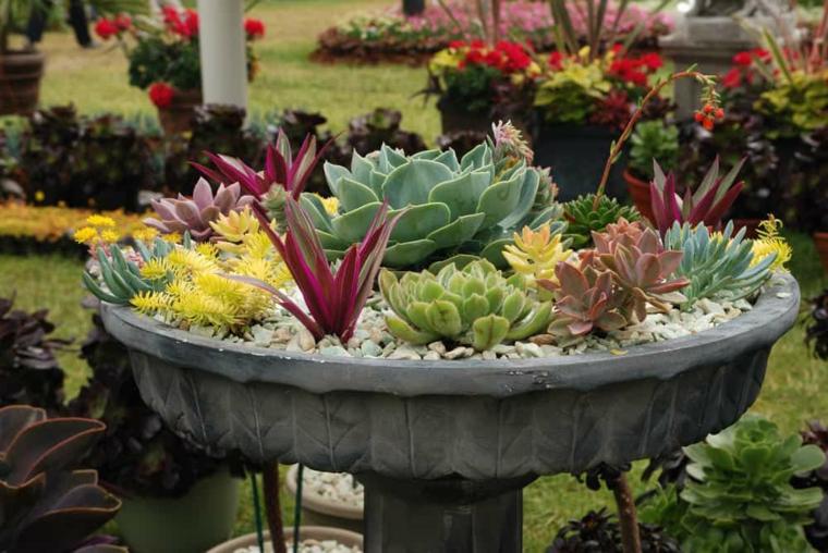 fontana da giardino utilizzata come vaso decorazione con piante grasse outdoor