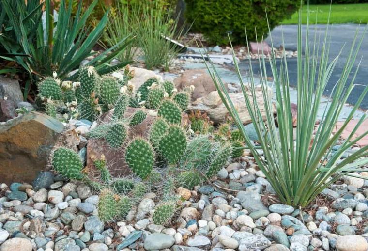 ghiaia da giardino con cactus piante grasse che resistono al sole