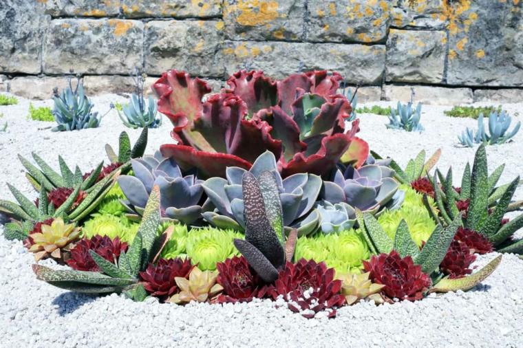 ghiaia da giardino con succulente piante grasse da esterno che fioriscono