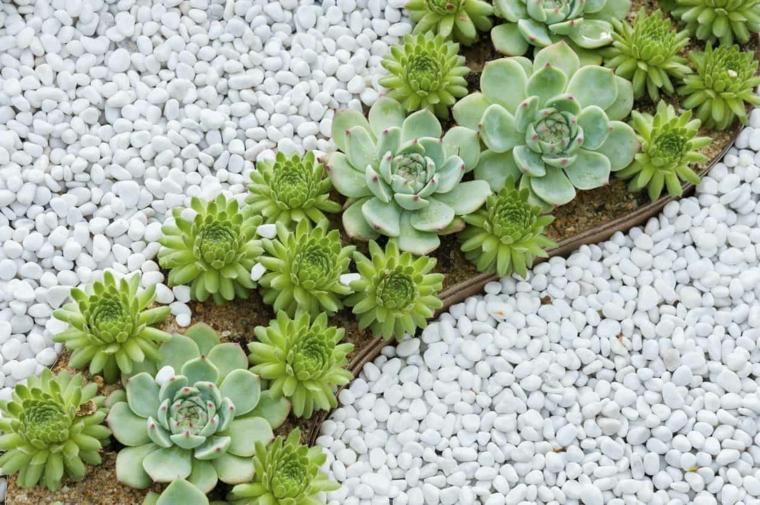 ghiaia da giardino quali sono le piante frasse che possono stare al sole