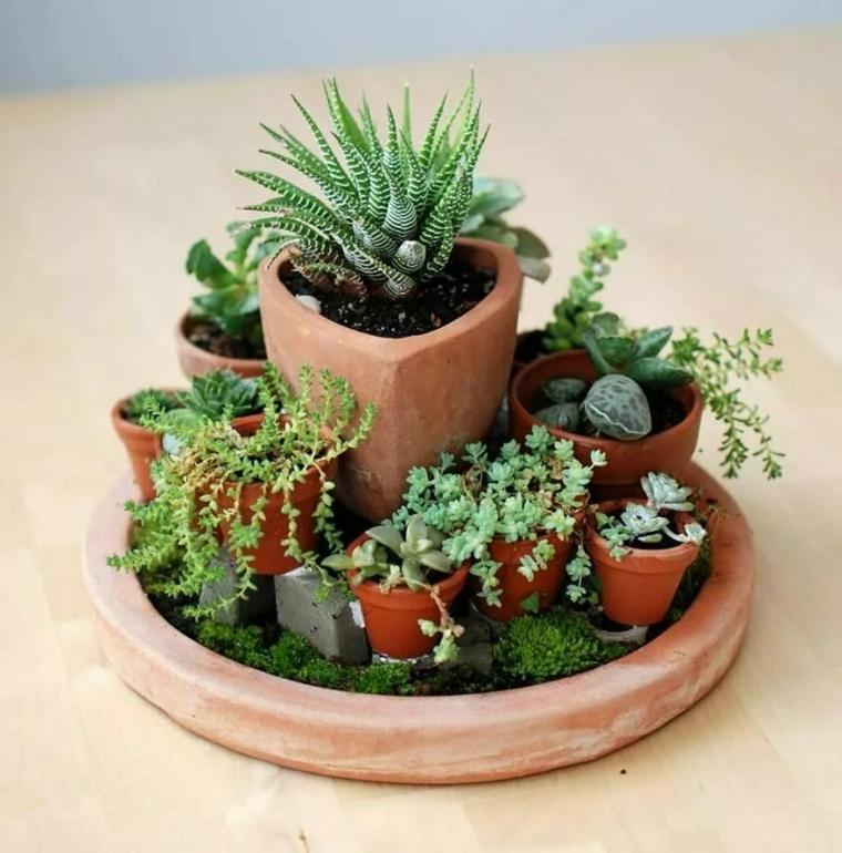 giardino in miniatura con vaso di terracotta decorazione con piante grasse indoor
