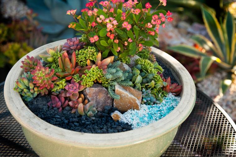 giardino in miniatura vaso con piante grasse colorate succulente che fioriscono
