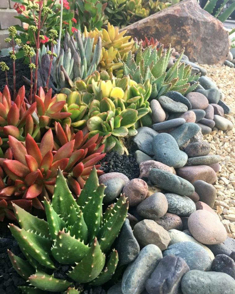 giardino roccioso con aloe vera quali sono le piante grasse che possono stare al sole