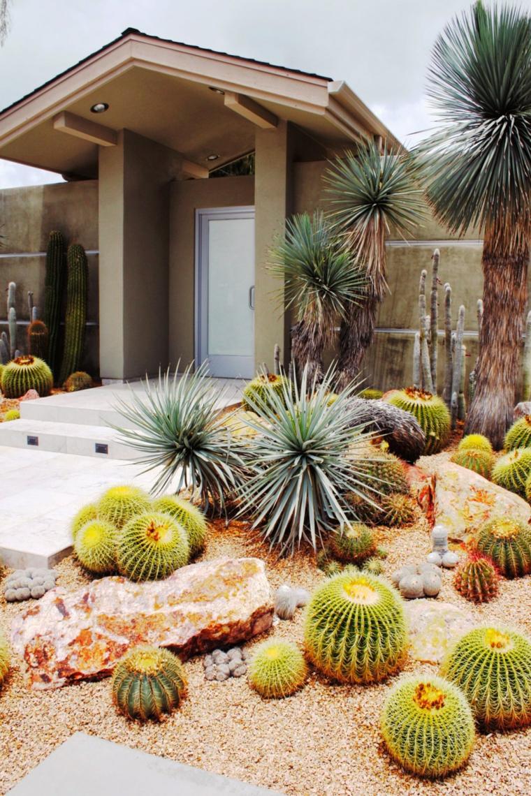 giardino roccioso decorato con piante grasse succulenti outdoor come cactus