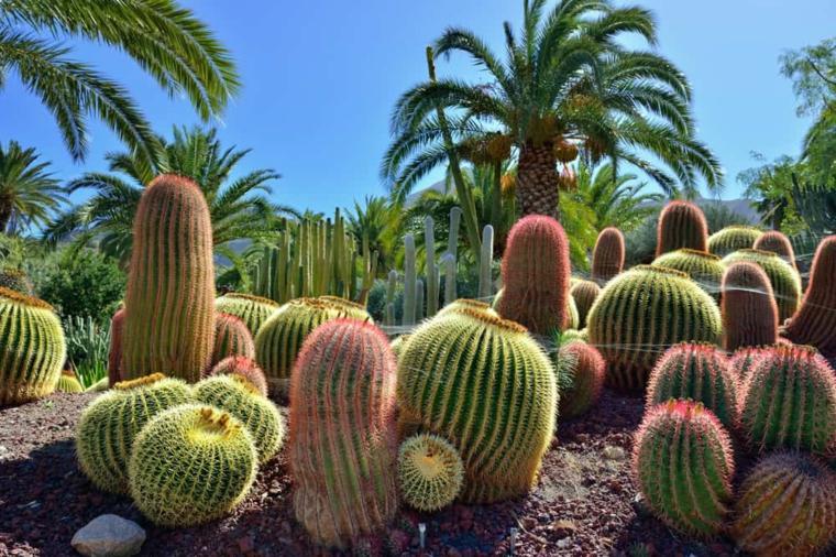 giardino tropicale con cactus composizioni piante grasse da esterno