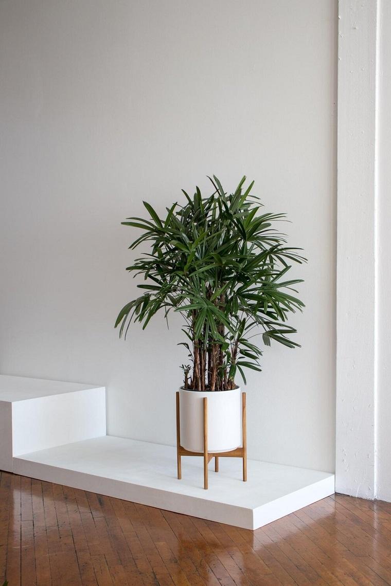 lady palm quali piante possono stare in casa vaso con piccola palma