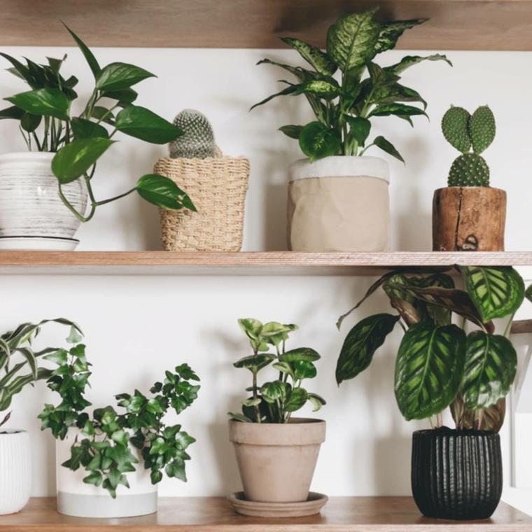 mensole di legno con vasi di piante indoor pianta dalla foglia larga