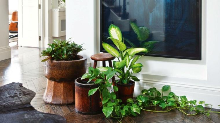 monstera in vaso di legno piante da interno dalla foglia larga decorare il soggiorno