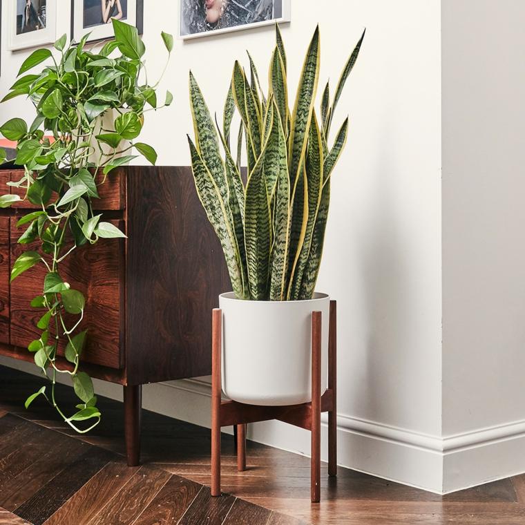 pianta del serpente vaso bianco di ceramica quali sono le migliori piante da appartamento