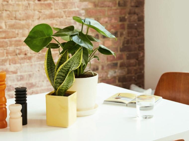 piante a foglia larga da appartamento tavolo da pranzo con pianta del serpente