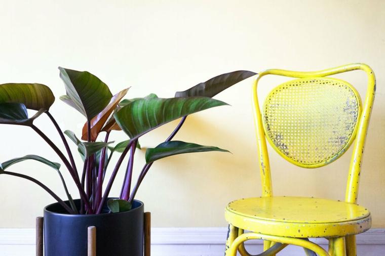 piante a foglia larga da appartamento vaso con pianta dalla foglia verde larga