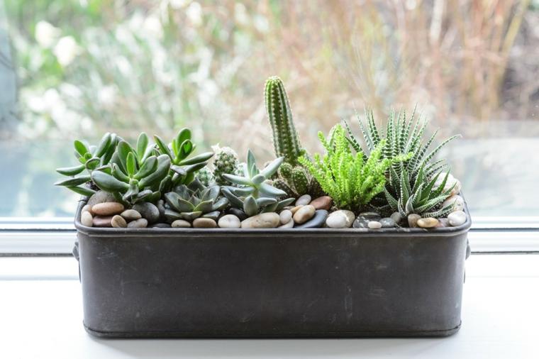 piante da appartamento poche cure vaso grigio con succulenti