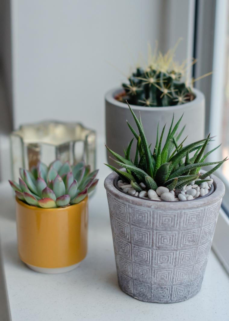 piante da appartamento resistenti vasi con succulente decorare il davanzale della finestra