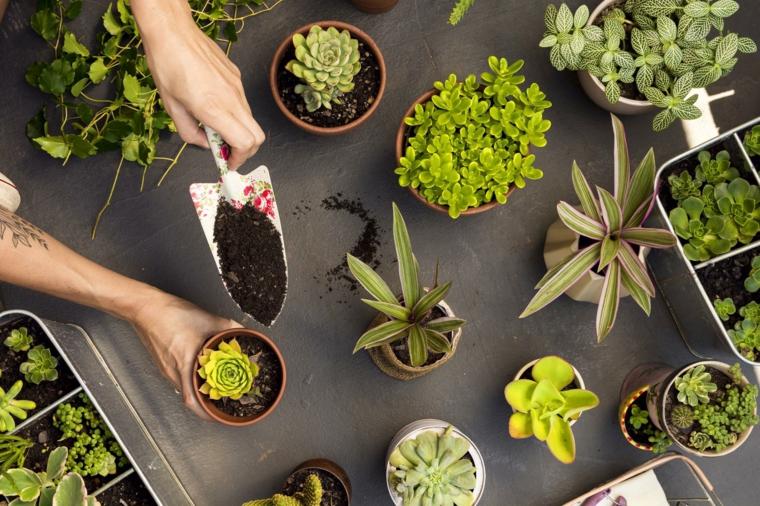 piante da appartamento resistenti vasi di succulente da trapiantare