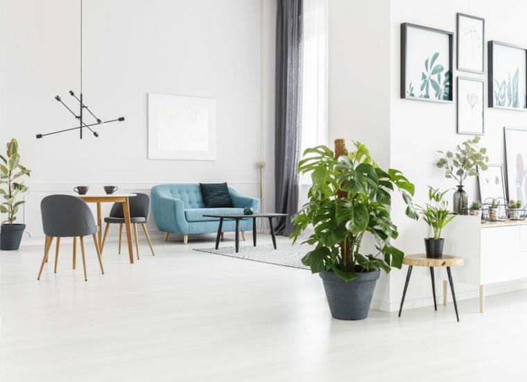 piante da appartamento verdi monstera grande con foglia verde